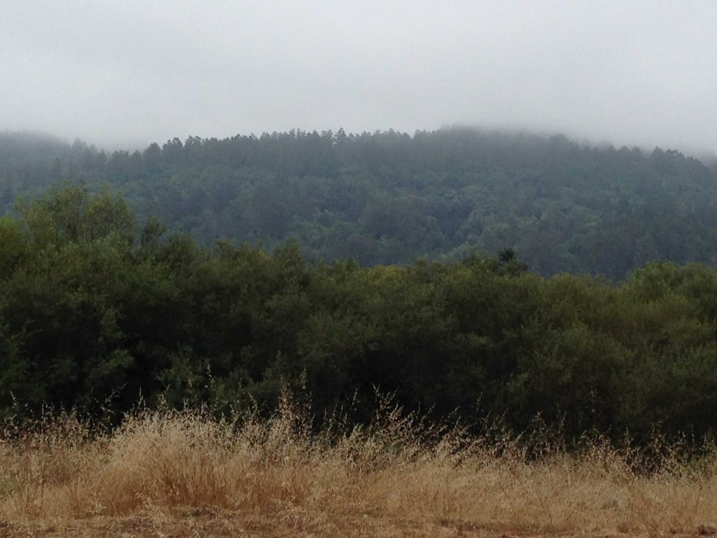 The coast is just beyond this foggy ridgeline that parallels Highway 1.